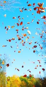Tanz der Farben - Blätter