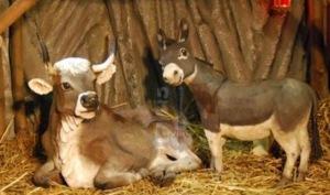 Krippenspiel Ochs und Esel